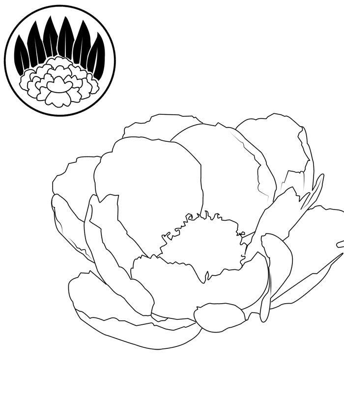700x850 Drawn Peony Simple
