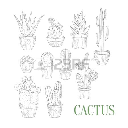 450x450 Flower Herbarium Hand Drawn Realistic Detailed Sketch In Classy