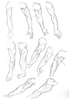 235x333 Pin By Kate Lirov On No Drawings, Anatomy Reference