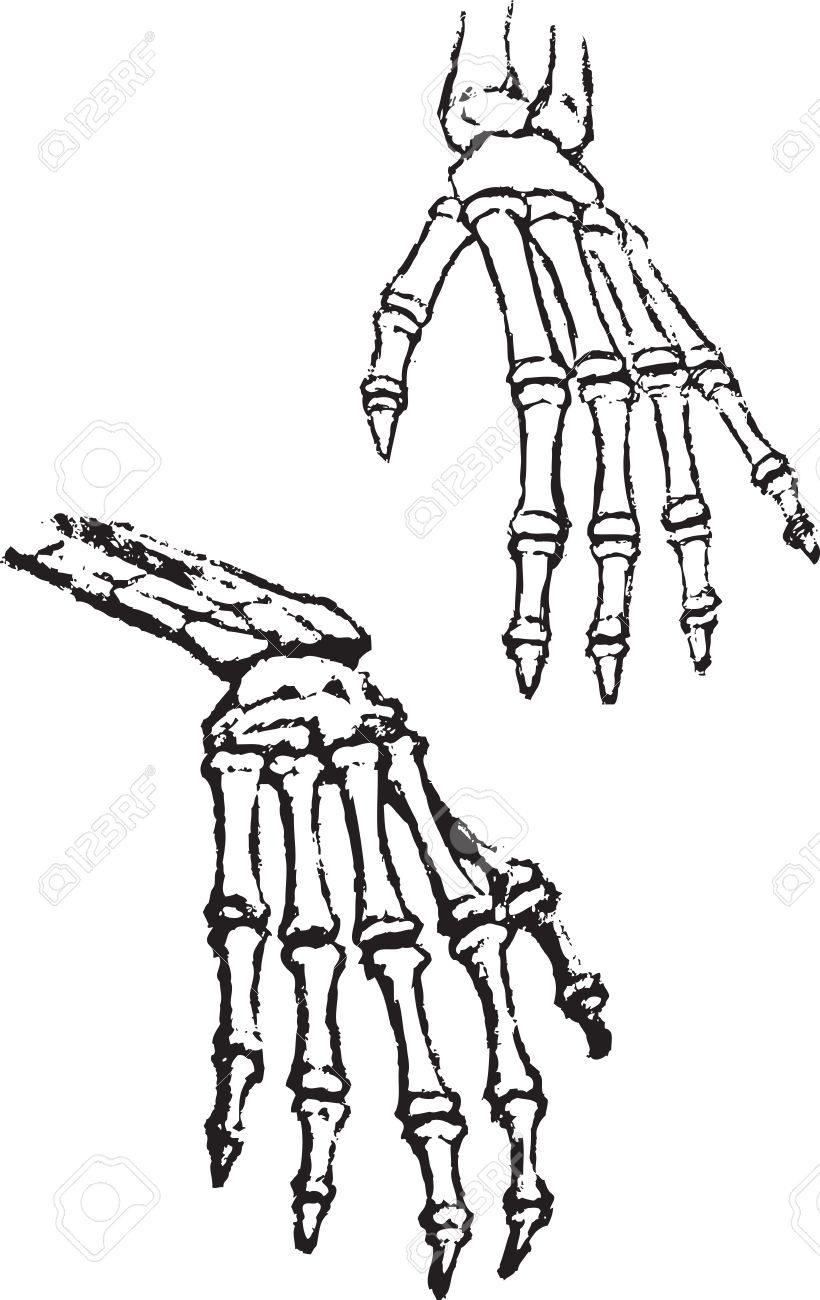 820x1300 Skeleton Hands Vector Bone Anatomy Human Black Sketch Drawing