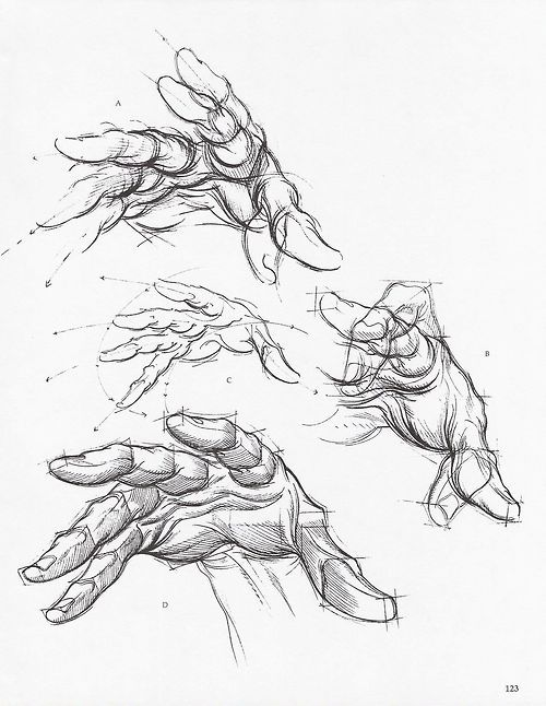 500x646 Character Design Collection Hands Anatomy