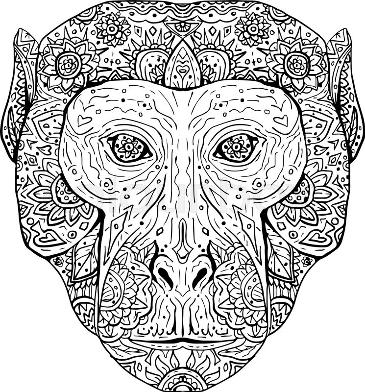 745x800 Illustration Of A Rhesus Macaque Head Viewed From Front Done