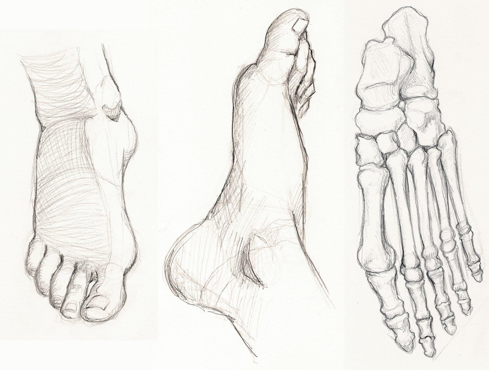 1600x1211 Figure Drawing And Anatomy Foot Studies