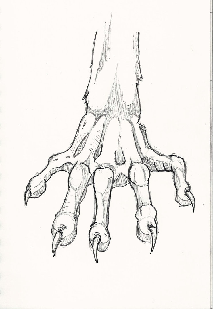 741x1077 Rodent Hand Study By Nemesis 504