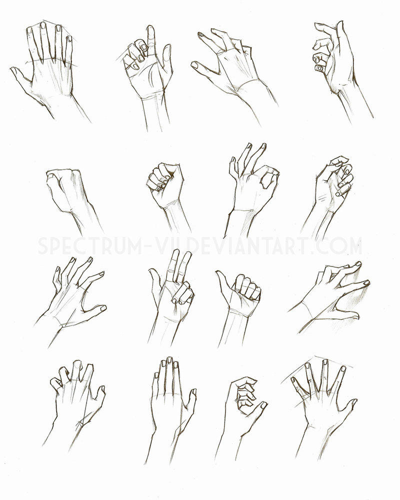 800x1000 Anatomical Study Hands By Spectrum Vii