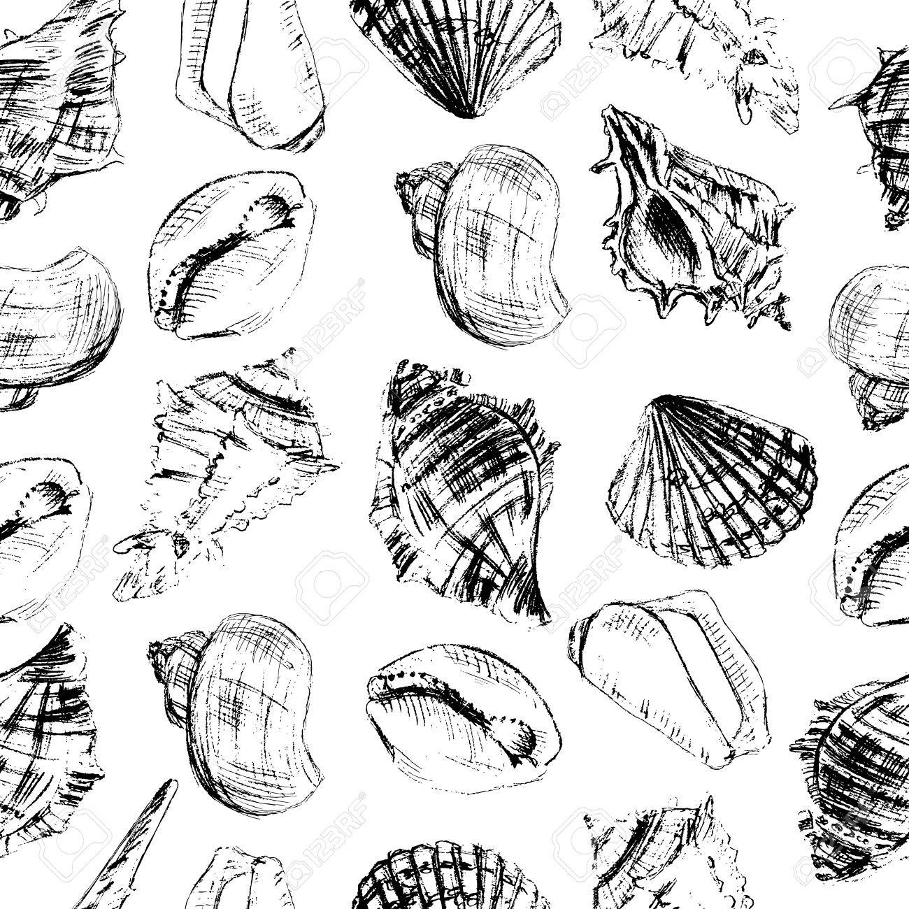 1300x1300 Seashells Hand Drawn Vector Graphic Etching Sketch Isolated