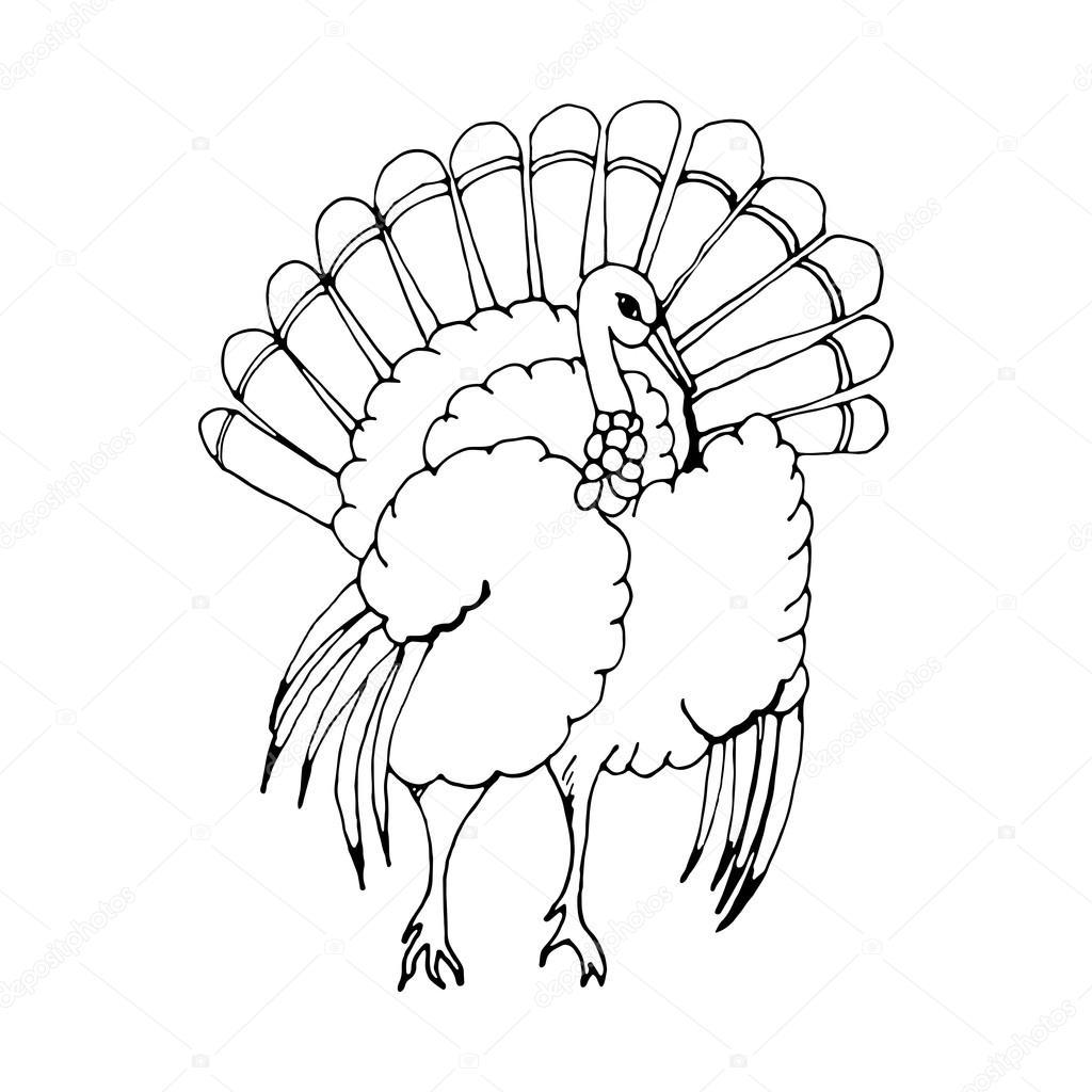 1024x1024 Hand Draw A Turkey Stock Vector Gennadiikorchuganov
