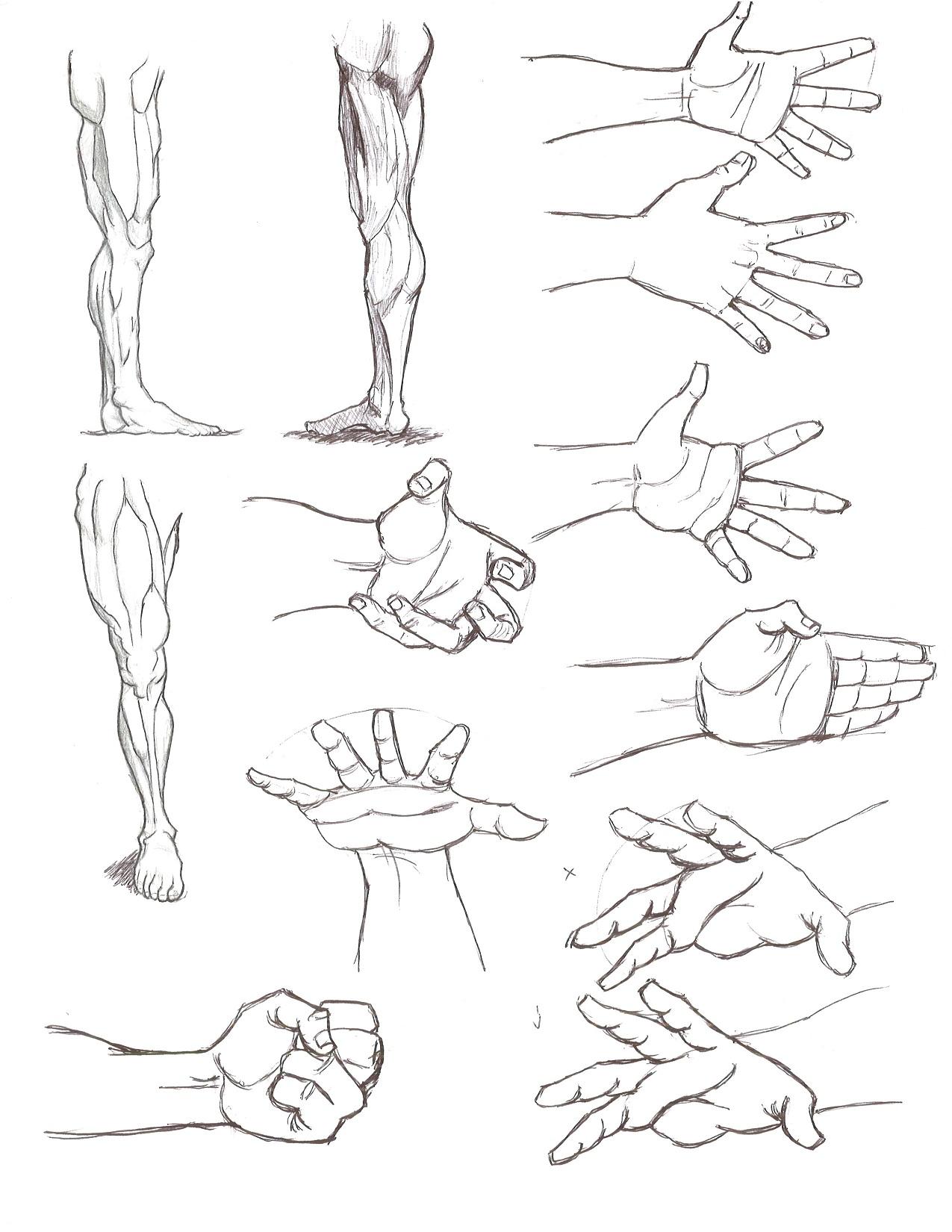 1275x1650 Anatomy Gotta Keep Drawing!