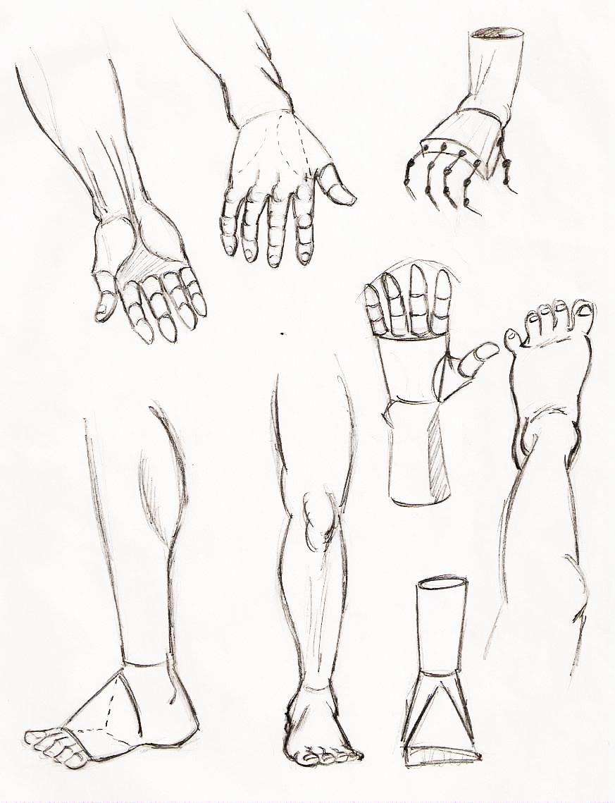 873x1139 Dinosaur Feet Sketch