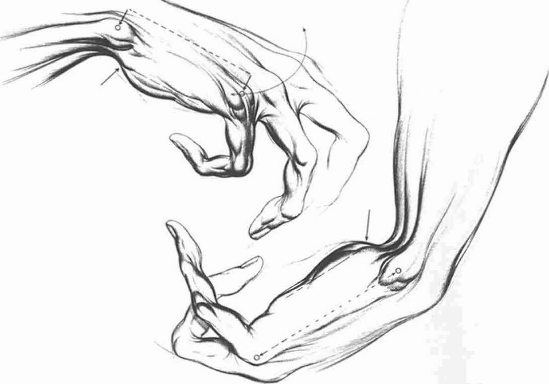 1090x762 Drawing Of A Wrist Anatomical Landmarks And Surface Stress
