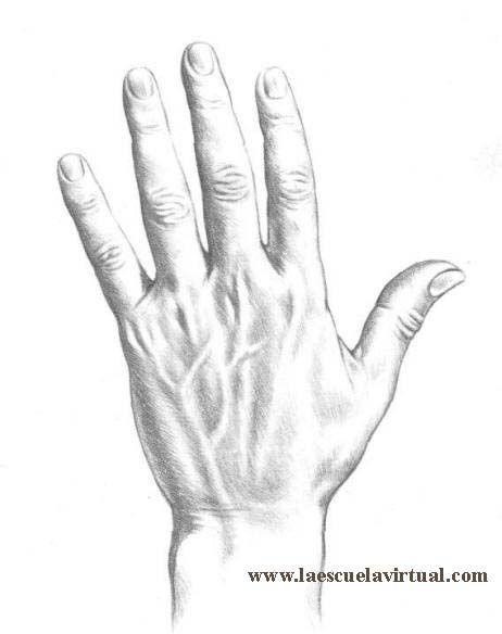 462x584 Tutorial Dibujo De Manos, Diferentes Posiciones, Curso Online How