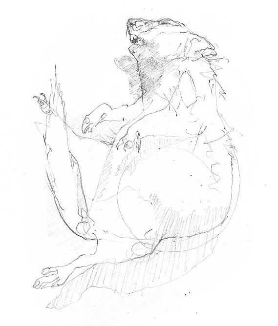 569x668 Drawing Animals