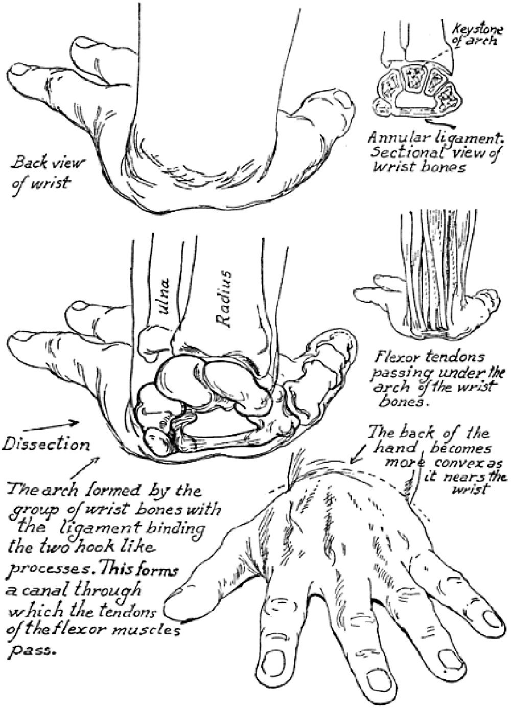1000x1387 Anatoref Hands. Drawing