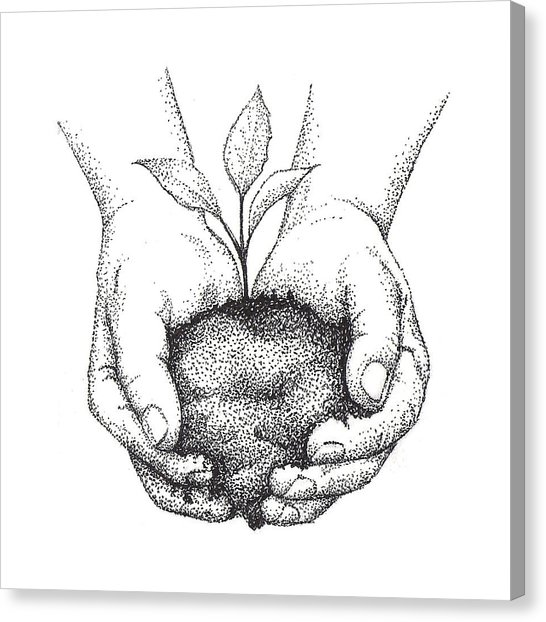 546x622 Hands Holding Seedling Drawing By Christy Beckwith