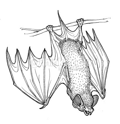 409x422 Hanging Bat Drawing Fun For Christmas