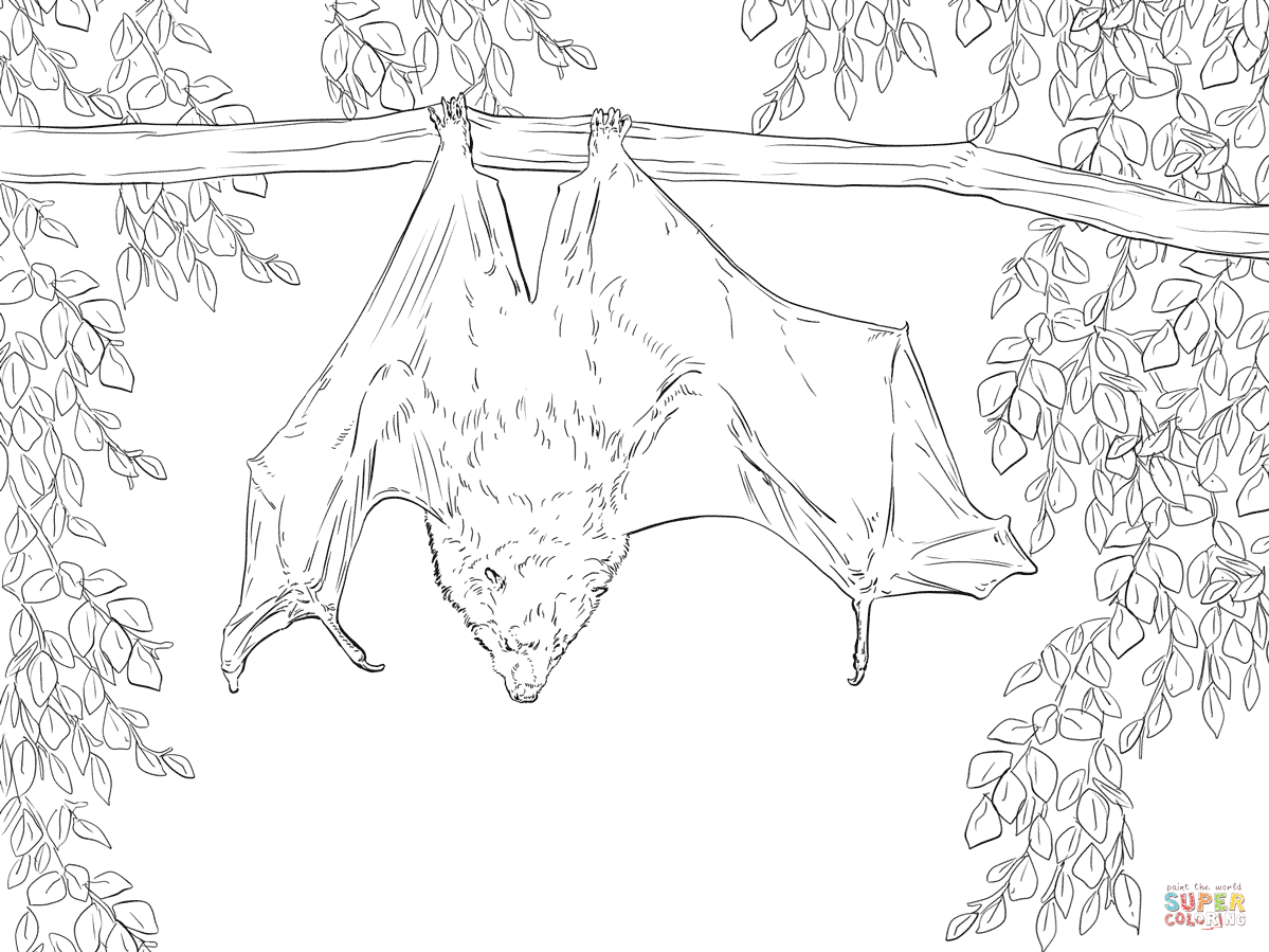 1199x899 Rodrigues Fruit Bat Coloring Page Free Printable Pages