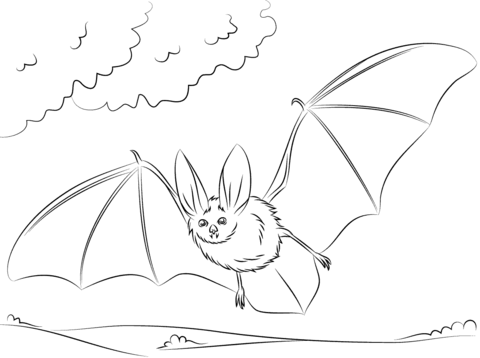 480x358 Townsend's Big Eared Bat Coloring Page Free Printable Coloring Pages