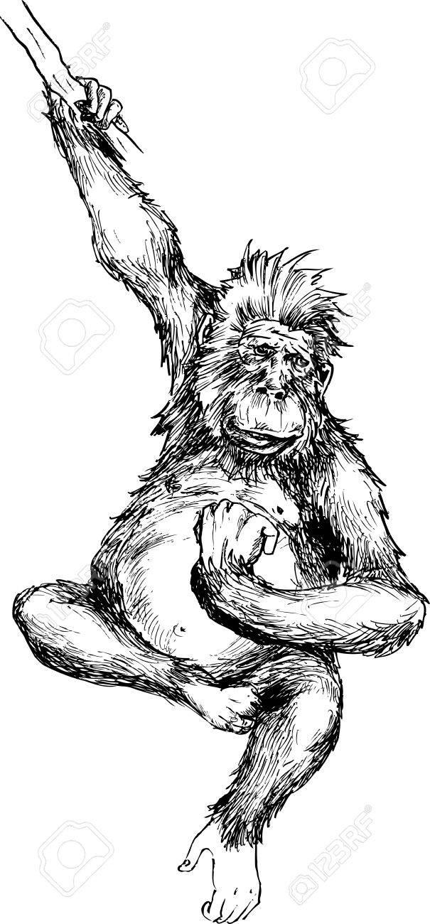 605x1300 Hand Drawn Monkey Hanging Royalty Free Cliparts, Vectors,