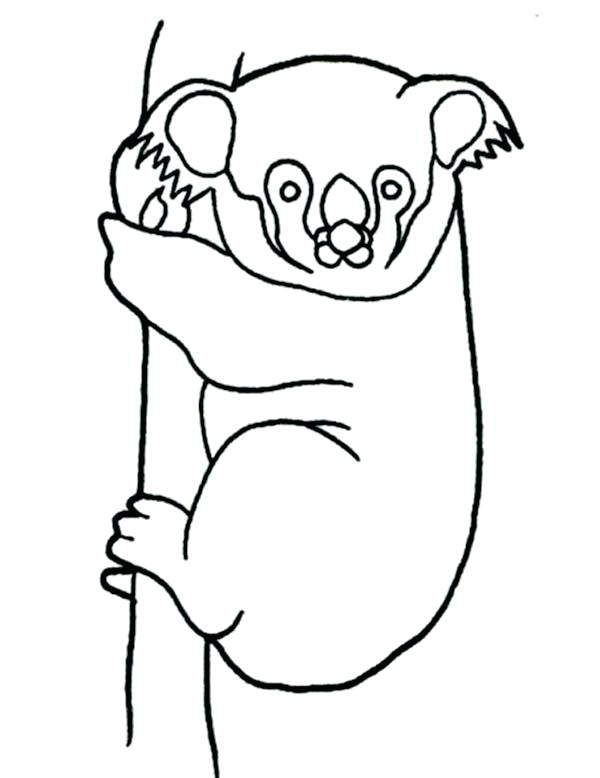 600x778 Chicago Bears Coloring Pages Koala Bear Hanging On Tree Coloring