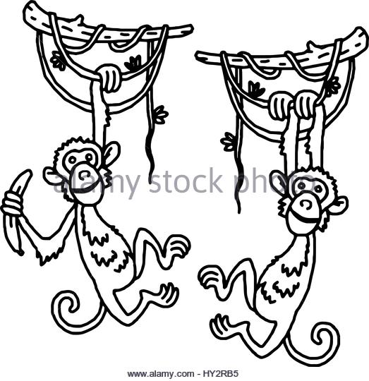 523x540 Monkey Hanging By Tail Stock Photos Amp Monkey Hanging By Tail Stock