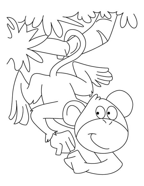 600x776 Monkey Can Hanging On A Branch With Its Tail Coloring Page