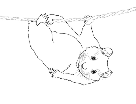 480x365 Cute Hamster Hanging On A Rope Coloring Page Free Printable
