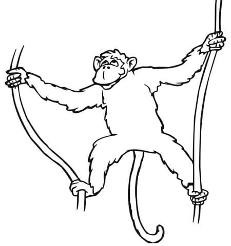 450x480 Monkey Hanging On Liana Coloring Page Free Printable Coloring Pages