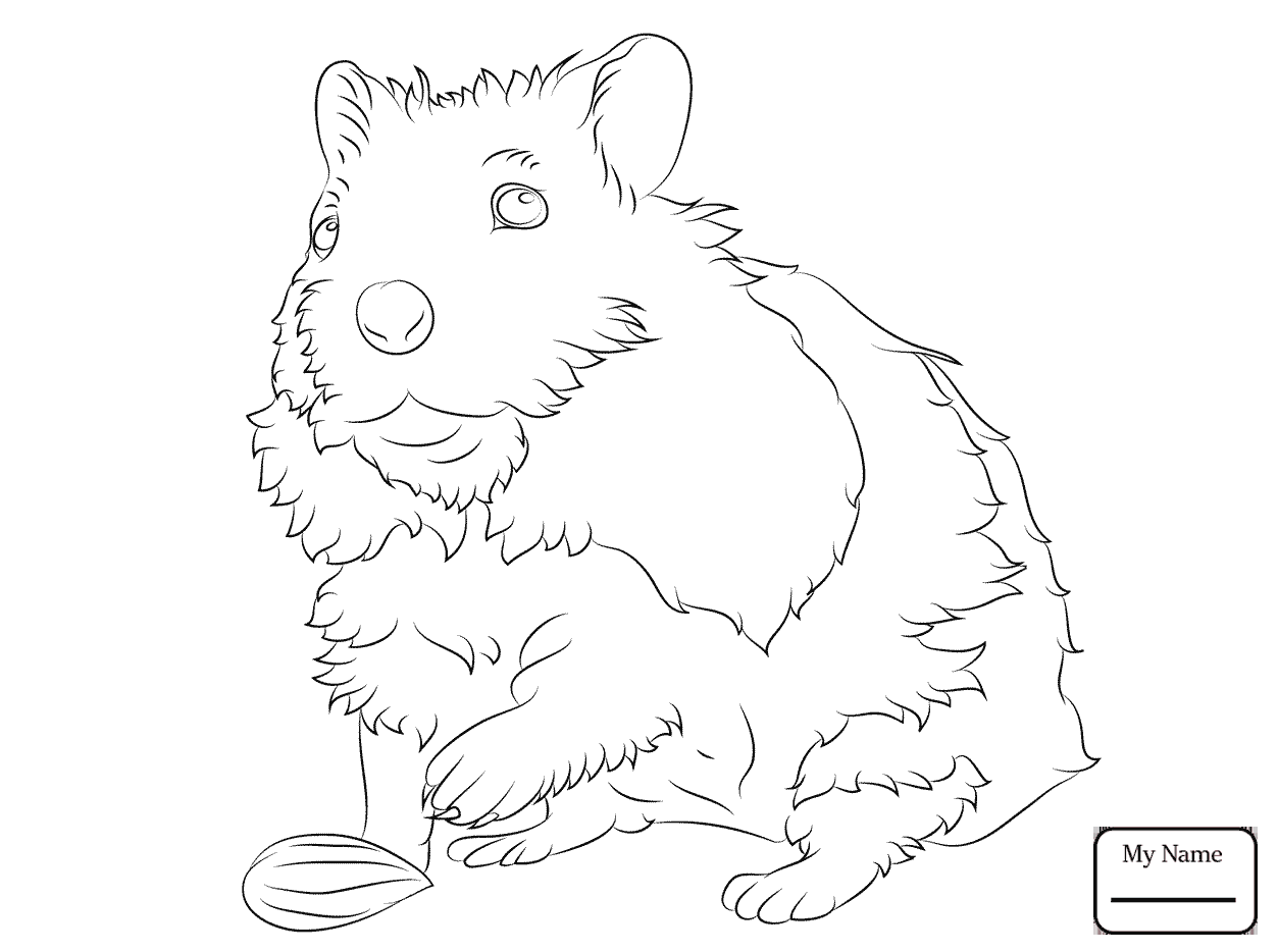 1253x934 Coloring Pages Mammals Cute Hamster Hanging On A Rope