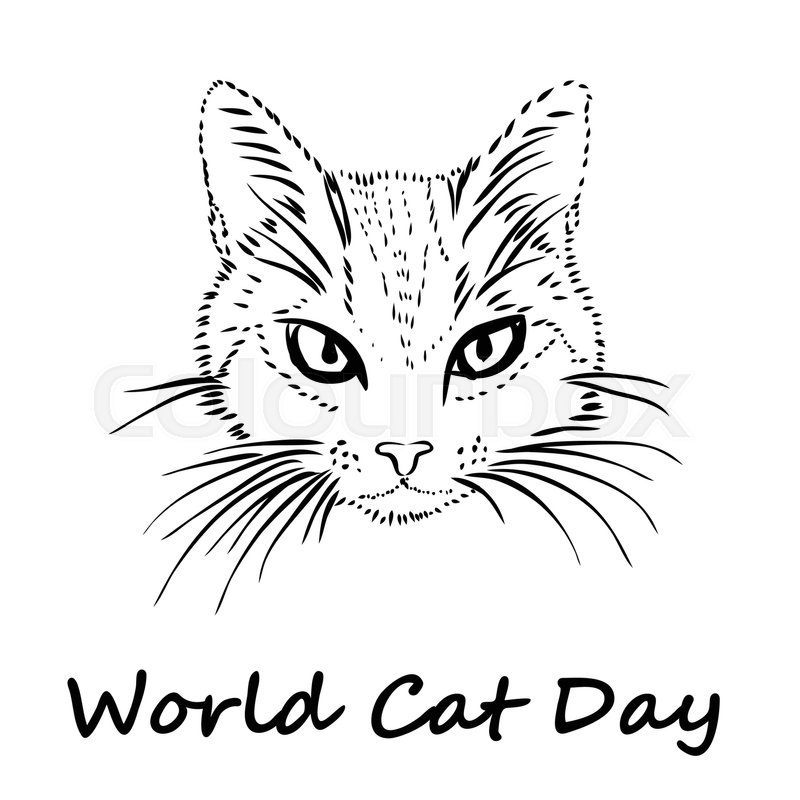 800x800 Happy Cat Day. International Cat Day. Cat Sketch Is On White