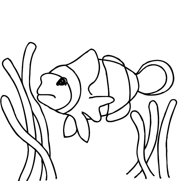 600x600 Finding Nemo Clown Fish Coloring Pages Finding Nemo Clown Fish