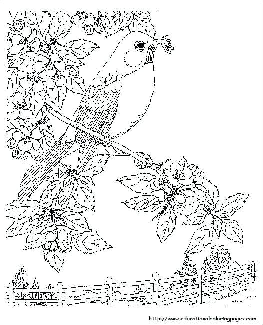 527x651 Nature Coloring Page Happy Nature Coloring Pages Top Coloring