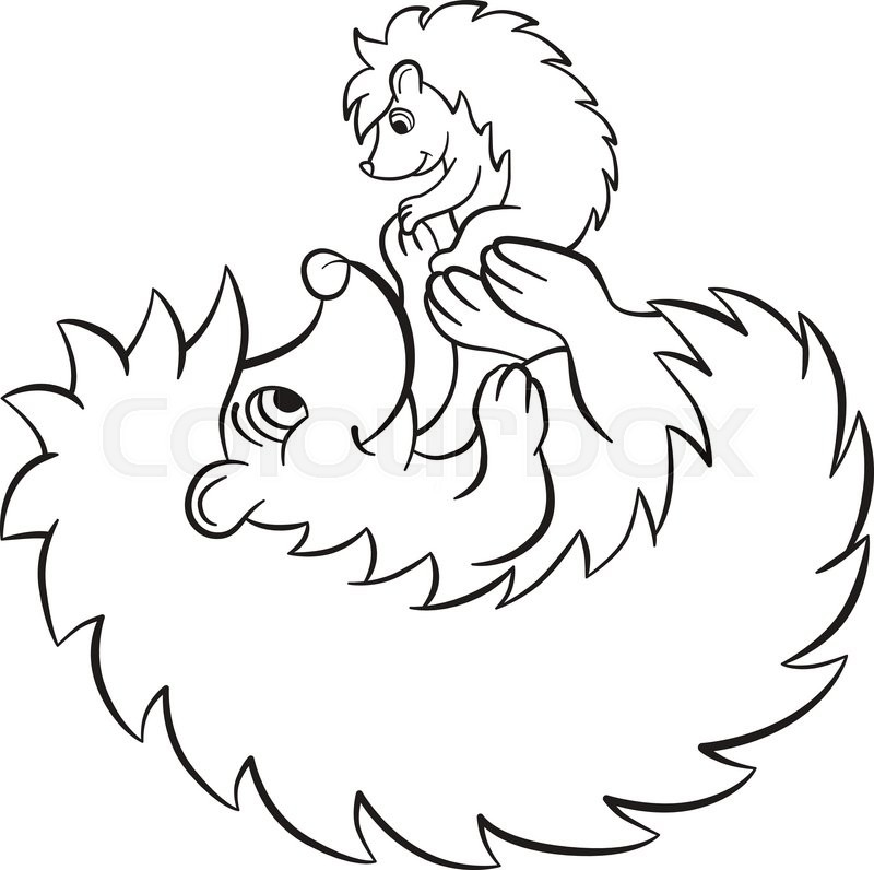 800x796 Coloring Pages. The Hedgegoh Holds Little Cute Hedgehog Baby