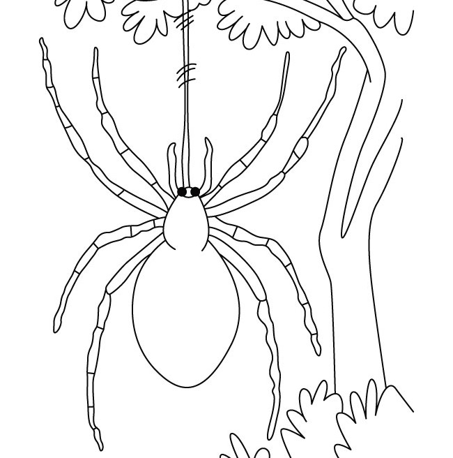 650x656 Spider Shape Template