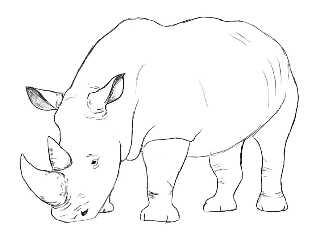 1024x768 How To Draw A Rhino Rhinoceros, Rhinos And Tutorials