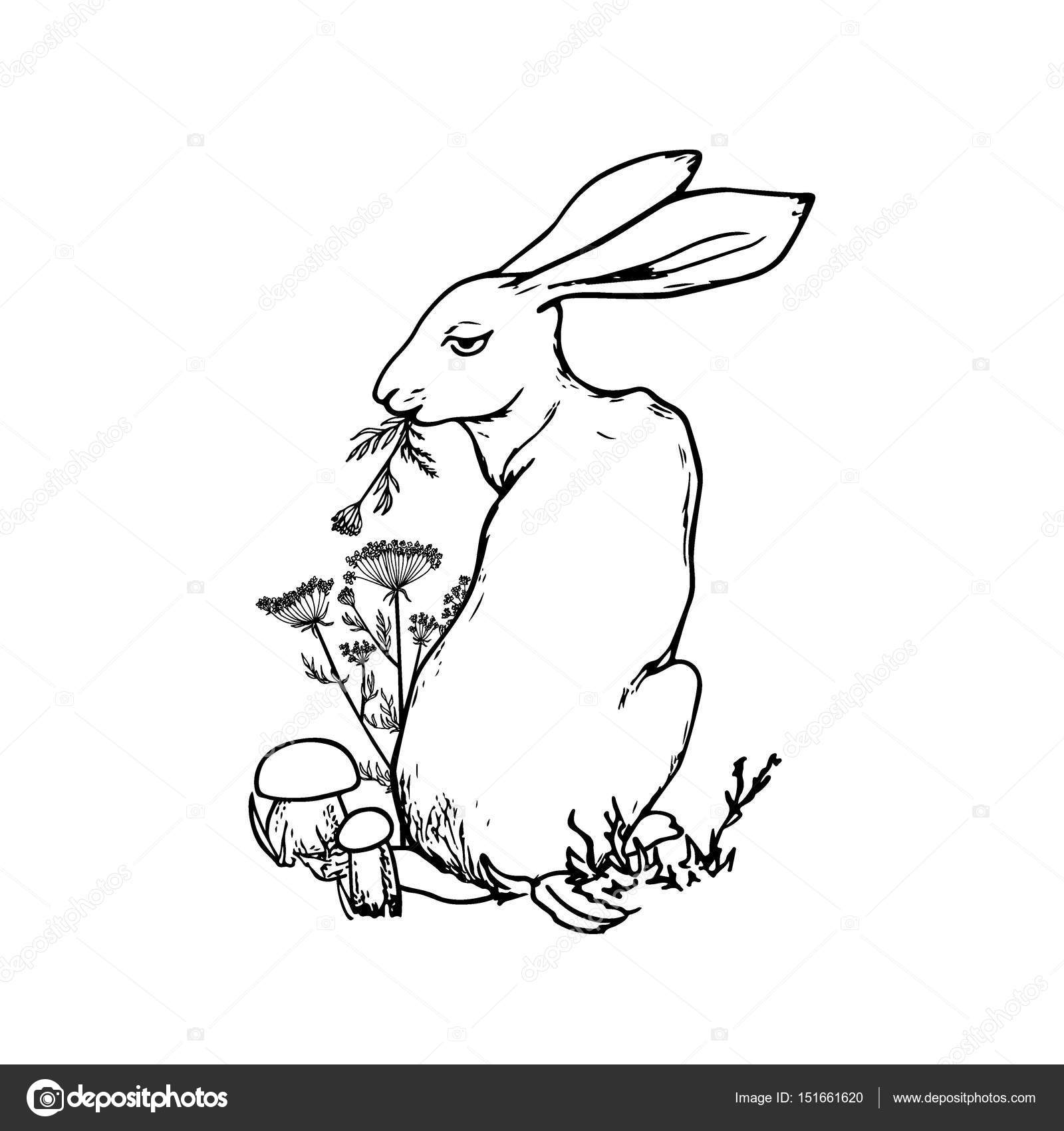 1600x1700 Hand Drawn Hare Stock Vector Ezhevica