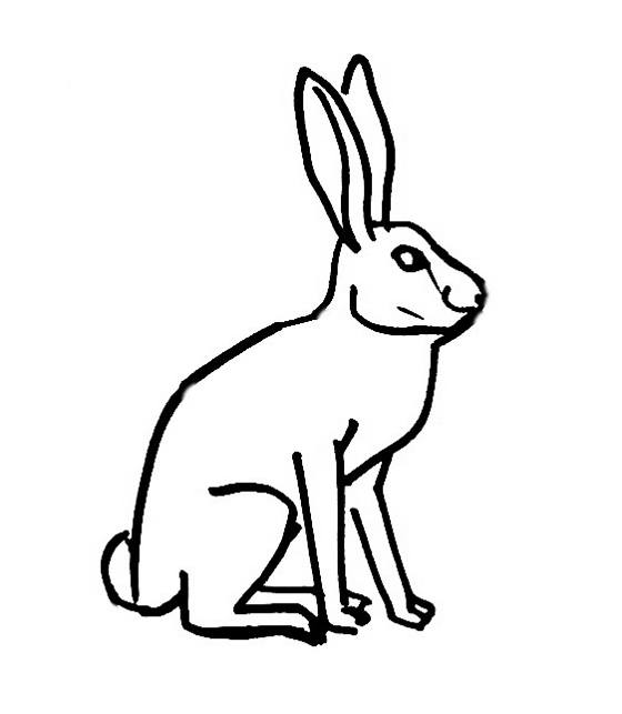 560x643 Hare Coloring Pages