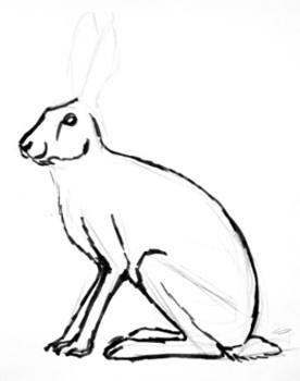 276x350 How To Draw A Hare