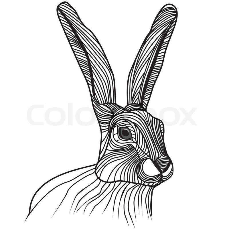800x800 Rabbit Or Hare Head Vector Animal Illustration For T Shirt. Sketch