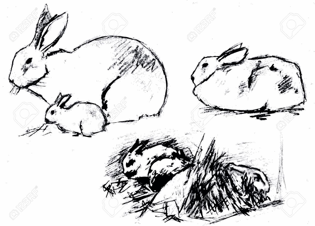 1300x931 Rabbitpet Hare Houseanimal Grass Vector Black Drawing Sketch