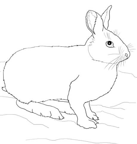 459x480 Snowshoe Hare Or Rabbit Coloring Page Free Printable Coloring Pages