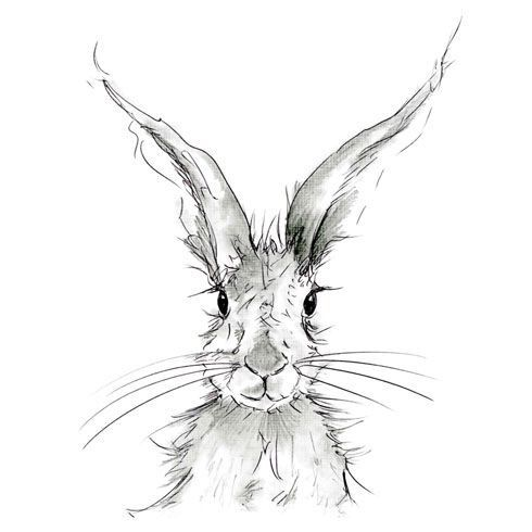 490x490 Snowshoe Hare Nancy Hilgert Charcoal, Pencil And Ink Drawings