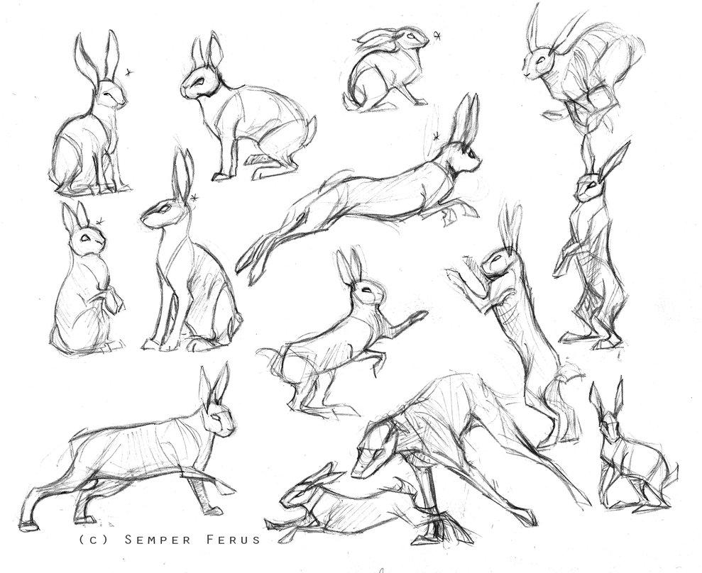 989x808 Drawn Rabbit Line Art