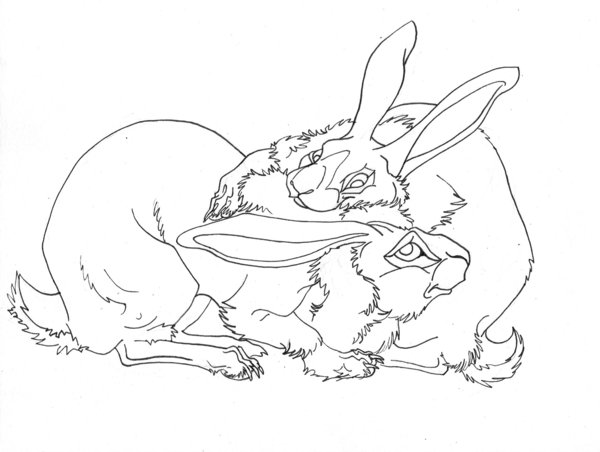 600x452 Belgian Hare Line Art By Eviecats
