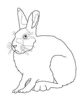 323x430 Top 93 Hare Clip Art