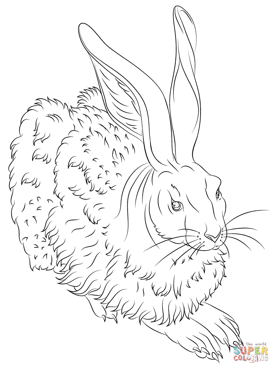 916x1228 Young Hare By Albrecht Durer Coloring Page Free Printable