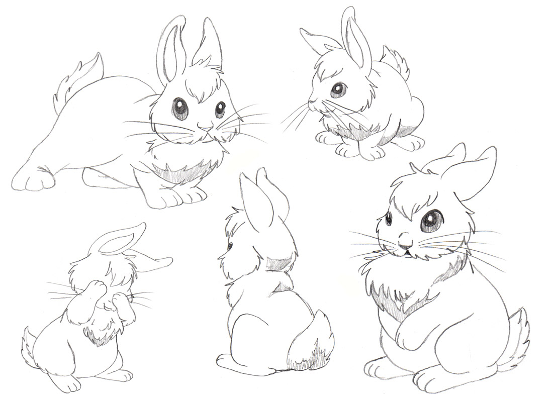 1100x800 Drawing A Bunny Rabbit 27 Best Images About Drawing Rabbits