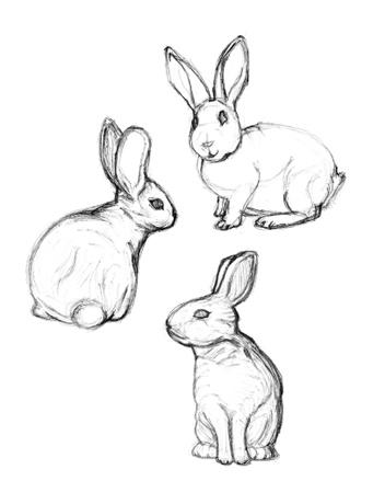 352x439 Drawn Rabbit Bunny Line