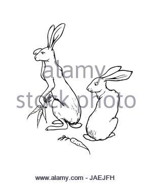 300x361 Hand Drawn Hares Stock Vector Art Amp Illustration, Vector Image