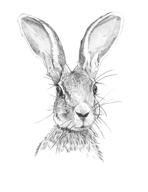 616x800 Hare Greeting Cards By Gavin Bake Redbubble