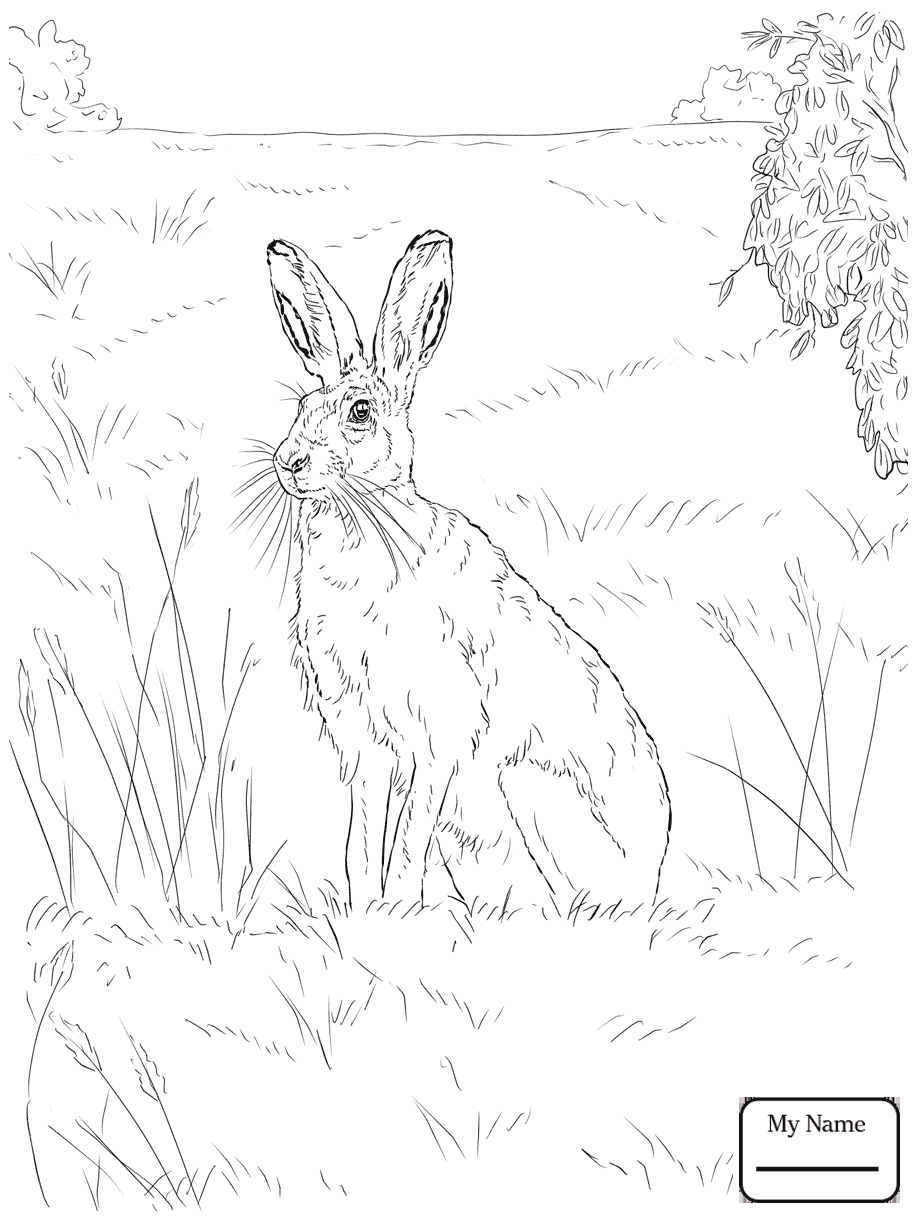917x1223 Mountain Hare Hares Mammals Hares Coloring Pages